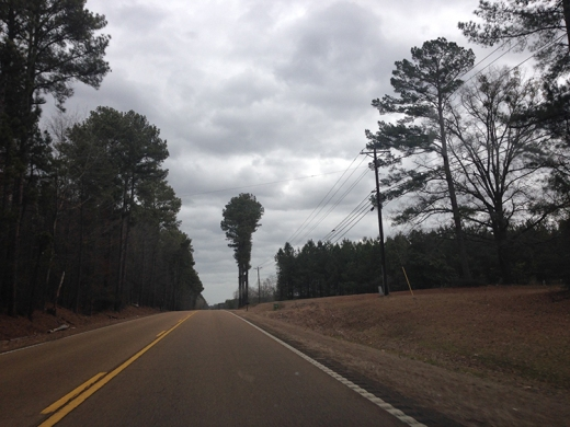 Odd looking tree on Highway 16 between Carthage and Edinburg, MS