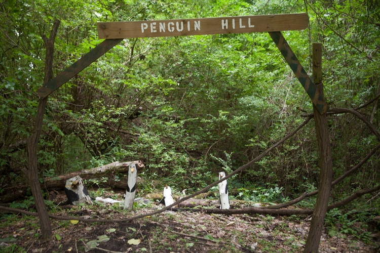 Penguin Hill_small