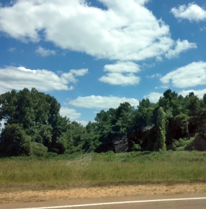 Kudzu from the car_Taylor & WV